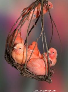 Fuzzy peachy babies