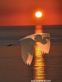 Bird at the time of sunse