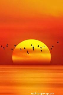 Amazing sunset with birds ,wallpapers,images,