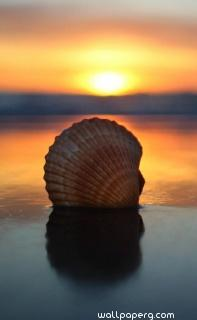 Sunset with shell ,wide,wallpapers,images,pictute,photos