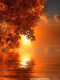 Orange leaves sunset