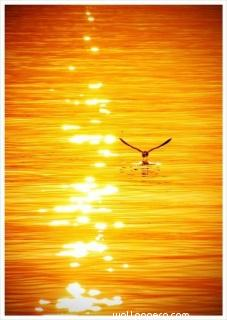 Sunset with the bird ,wide,wallpapers,images,pictute,photos
