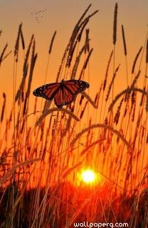 Butterfly and the sunset