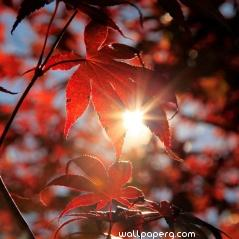 Autumn light ,wide,wallpapers,images,pictute,photos