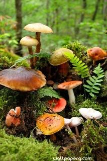 Mushrooms at the time of