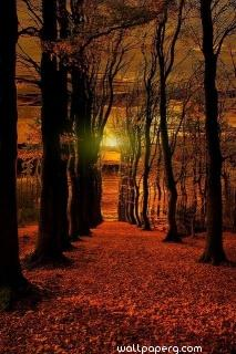 Autumn sunset wallpaper ,wide,wallpapers,images,pictute,photos