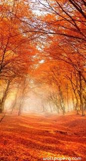 Autumn leaves ,wide,wallpapers,images,pictute,photos