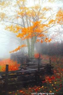 Autumn mist ,wide,wallpapers,images,pictute,photos