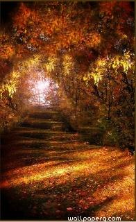 Autumn path ,wide,wallpapers,images,pictute,photos