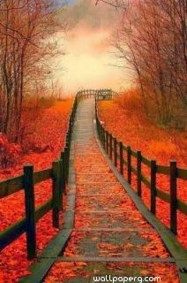 Autumn path of love