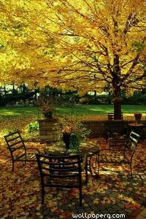Autumn leaves and sitting area
