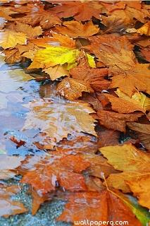 Autumn leaves image