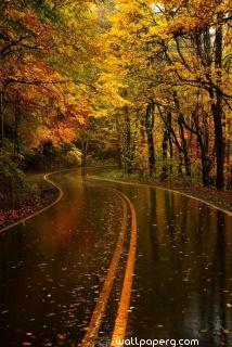 Autumn and rainy path ,wide,wallpapers,images,pictute,photos