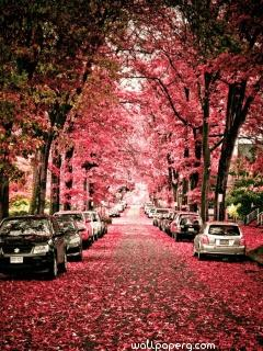 Pink leaves of autumn