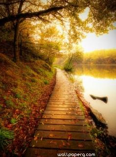 Wooden path at the time of autumn ,wide,wallpapers,images,pictute,photos