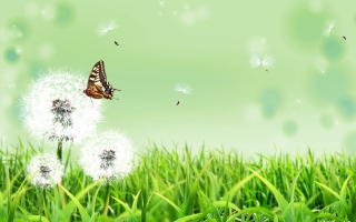 Butterfly nature ,wide,wallpapers,images,pictute,photos