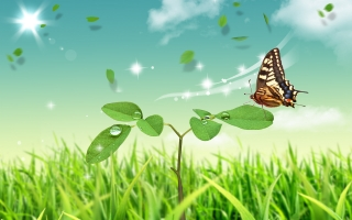 Butterfly world ,wide,wallpapers,images,pictute,photos