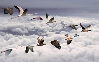 All birds widescreen ,wide,wallpapers,images,pictute,photos