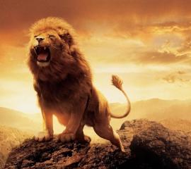 Aslan lion