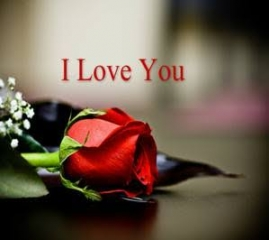 Red rose i love you quote