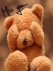 Miss teddy bear
