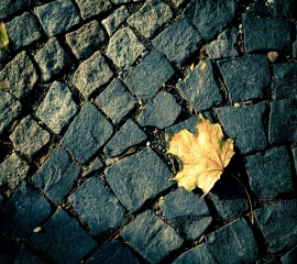 Autumn leaf ,wide,wallpapers,images,pictute,photos