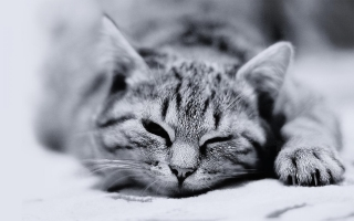 Cat black and white ,wallpapers,images,