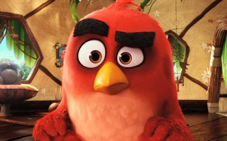 Rivio angry bird close up wallpaper ,wallpapers,images,