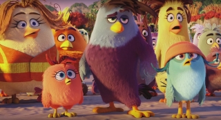 The angry birds movie wallpaper ,wallpapers,images,
