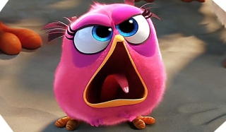 The angry birds movie pink bird ,wallpapers,images,