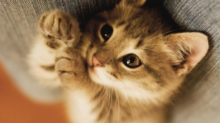 Cat claws ,wallpapers,images,