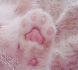 Whitepaw ,wide,wallpapers,images,pictute,photos