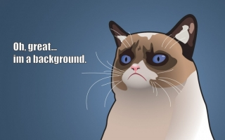 Funny cat background quote