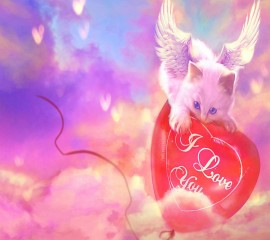 I love you hd wallpaper ,wallpapers,images,