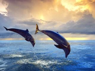 Bottlenose dolphins hd wi