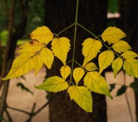 Leaf hd wide wallpaper fo