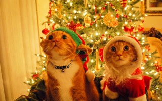 Christmas wishing hd wallpaper for laptop ,wallpapers,images,