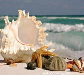 Sea shells hd wallpaper f