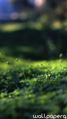 Grass level hd wallpaper for mobile screen savers