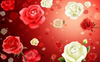 Roses hd widescreen