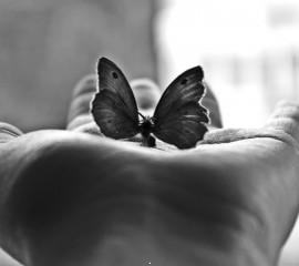 Butterfly hd wallpaper for laptop