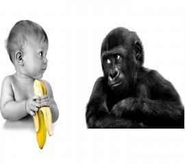 Want banana