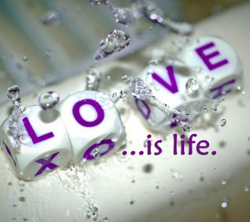 Love is life hd wallpaper