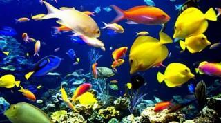 Bright fish hd wallpaper