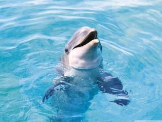 Dolphin hd wallpaper