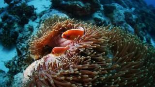 Fish and sea corals