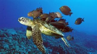 Fishes on turtle back