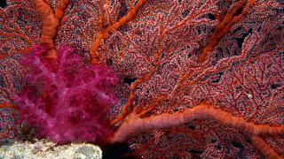 Corals wallpapers hd wallpaper