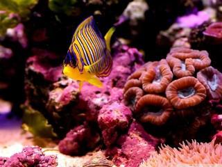 Reef fish wallpaper