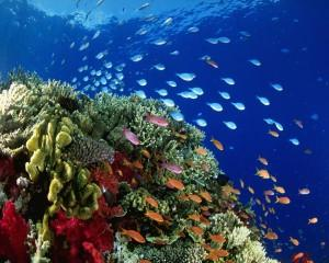 Under the sea ,wallpapers,images,